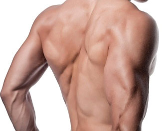 the top 5 exercises for increasing back mass - a1supplements, Muscles